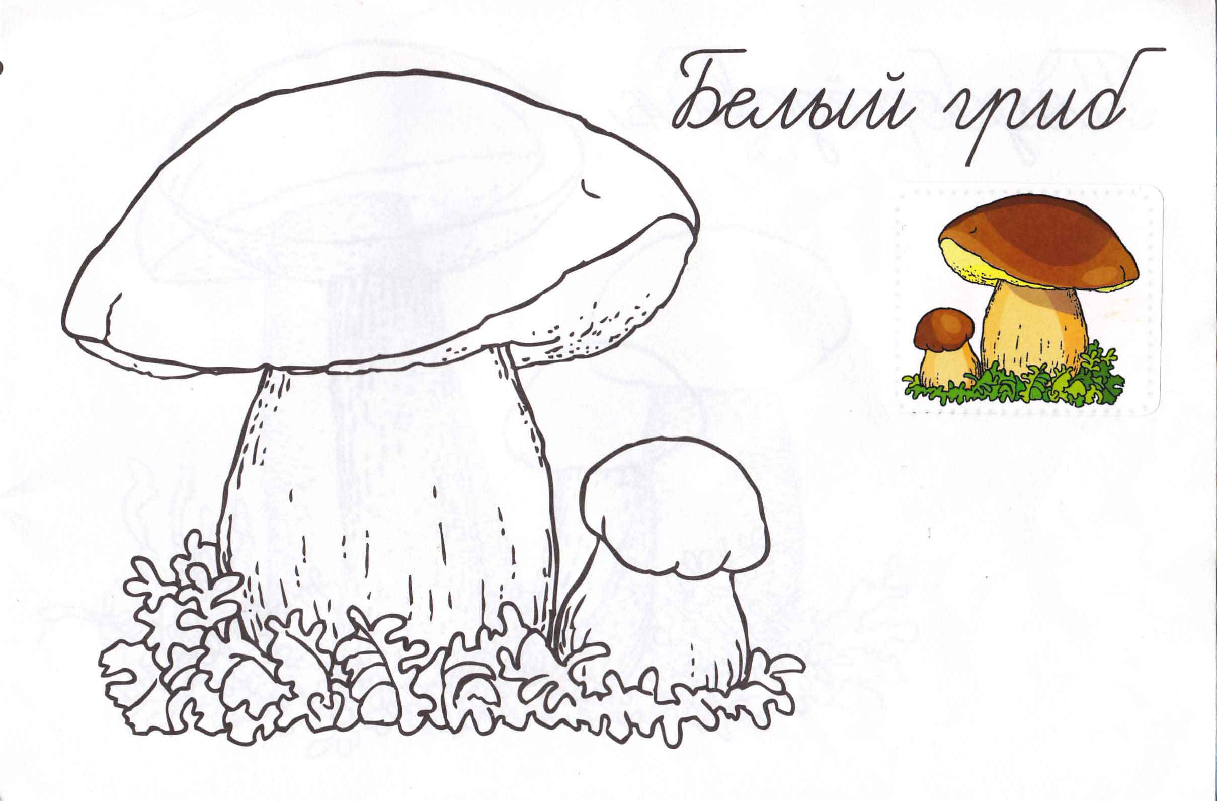 Раскраски грибов опят для детей